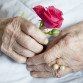 Hands of 92 years old lady holding beautiful rose - close up