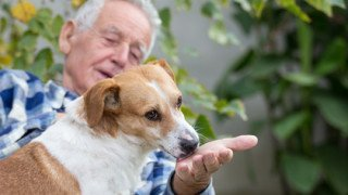 Cute dog sitting on senior man's lap and licking his hand on bench in courtyard